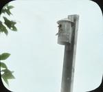 House Wren Using Packard Box, Amston, Connecticut by Herbert Keightley Job