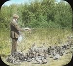Young Mallards and Black Ducks, Amston, Connecticut by Herbert Keightley Job