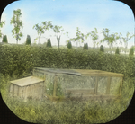 Breeding Pen for Quail, Storrs, Connecticut