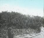 Heron Rookery, Florida