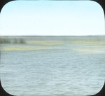 Beds of Wild Celery, Where Ducks Fed, N. Manitoba