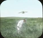 Marsh Hawk [Northern Harrier] Attacks, Gardiners Island, New York by Herbert Keightley Job