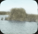 Blind for Duck Photos, Louisiana by Herbert Keightley Job