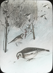 Untitled: Drawing Depicting Birds in Snowy Natural Setting (National Audubon Societies, 1974 Broadway, New York)