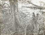 Untitled: Game Bird beneath Tree Branches by Herbert Keightley Job