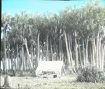 Our Camp, in Cabbage Palms, Florida